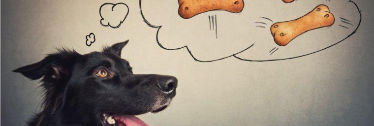 avantages biscuit chien fait maison