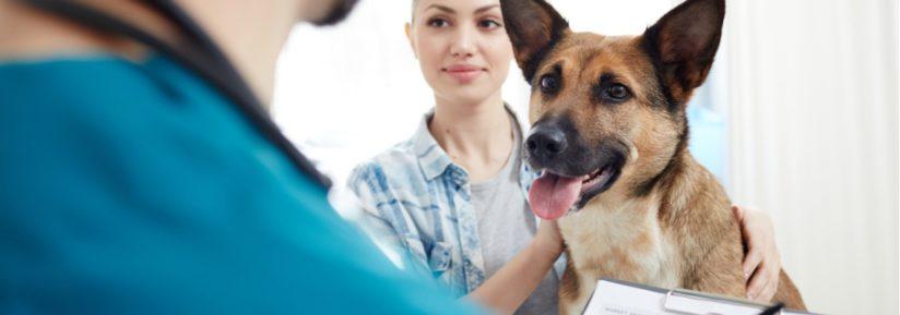 choisir assurance chien