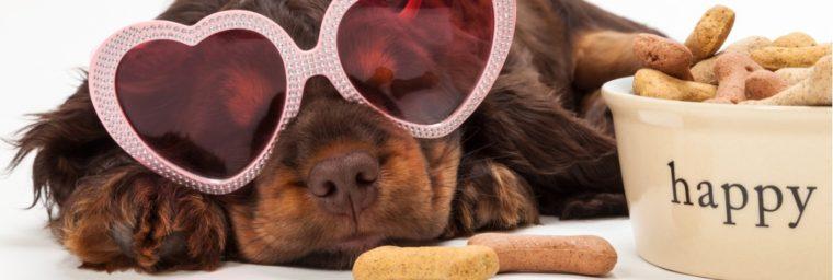 composition friandises saines chien