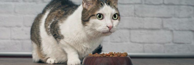 croquette-pour-chat