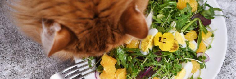 donner des fruits et légumes au chat