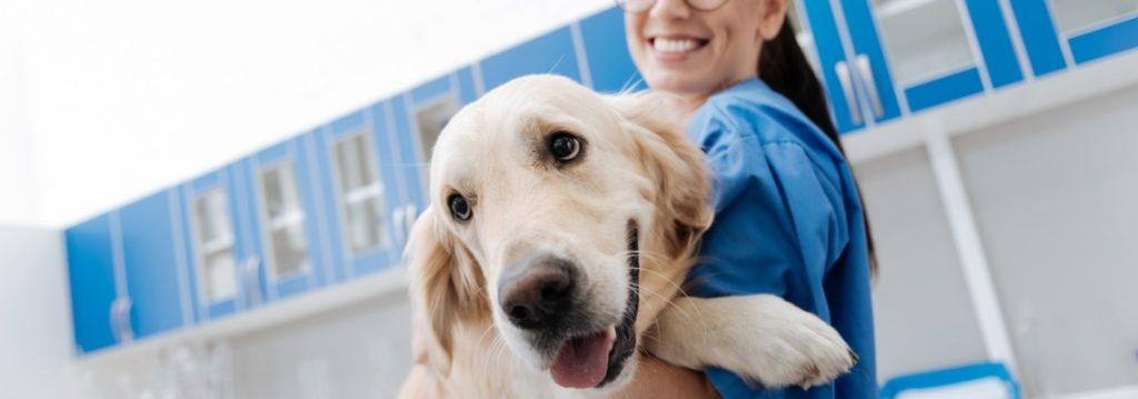prix vétérinaire comportementaliste