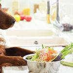 promotions ration ménagère pour chien
