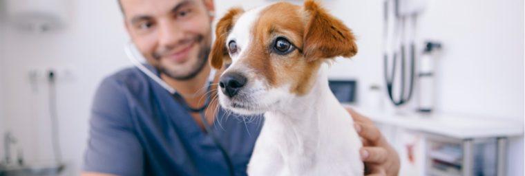 tarif d'un vétérinaire pour chien