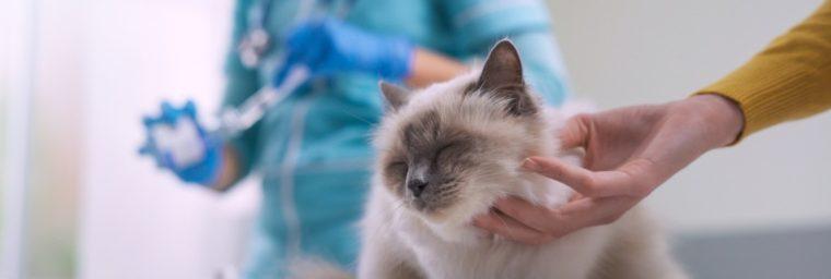 vaccin pour la rage du chat