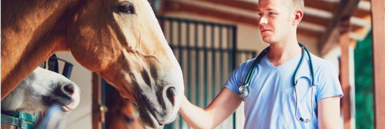 vétérinaire cheval