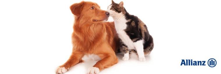 Allianz assurance animaux