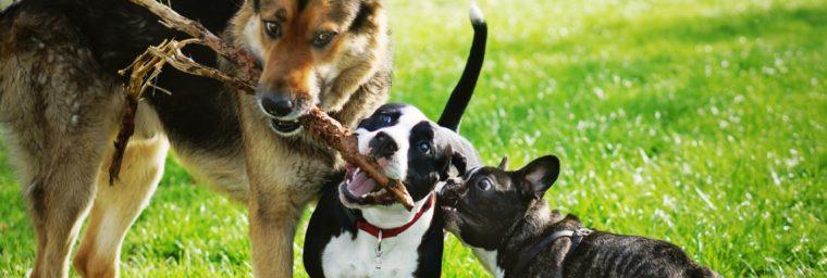 Avantages mutuelle chien pas chère