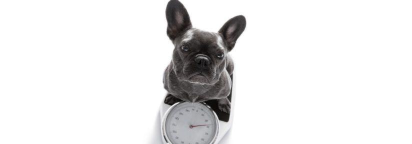 Calcul poids chien adulte