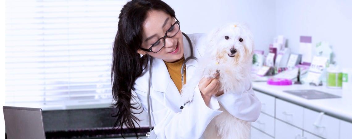 Comment se passe une une consultation vétérinaire