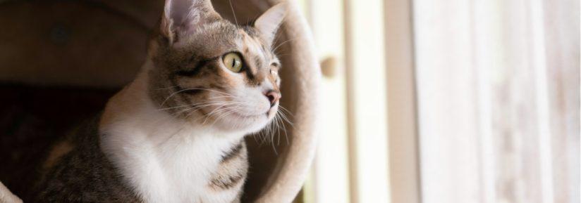 Garderie chat