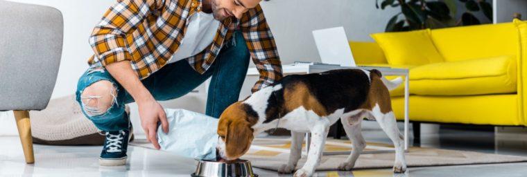 Nourriture Beagle