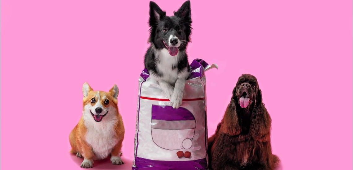 Nourriture chien selon races