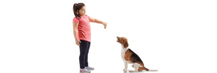 Quelles friandises pour chien