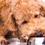 alimentation naturelle et bio pour chien