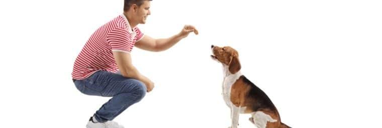 aliments interdits beagle