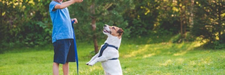 astuce dressage chien avec friandise