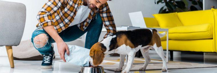 besoins nutritionnels journaliers chien