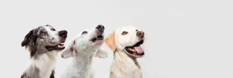 bien choisir gourmandises chien