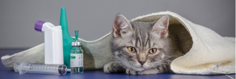 biopsie chat remboursement mutuelle assurance