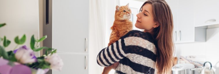 comparateur mutuelle chat