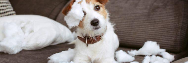conseils assurance responsabilité civile chien