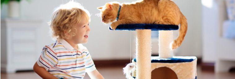 equipement Garderie chat