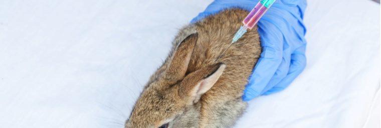 euthanasie lapin pas cher
