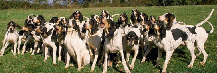 meilleure assurance chien de chasse