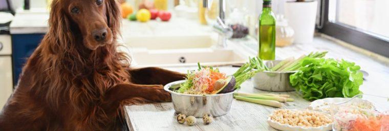 nourriture maison chien