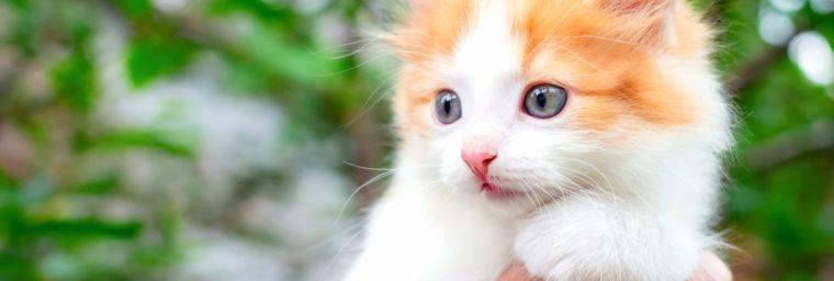 prix assurance chaton