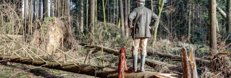 prix assurance chien de chasse