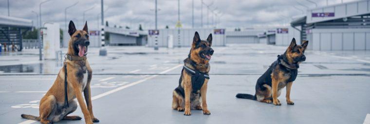 prix assurance responsabilité civile chien