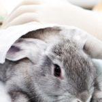 le prix d'une euthanasie d'un lapin