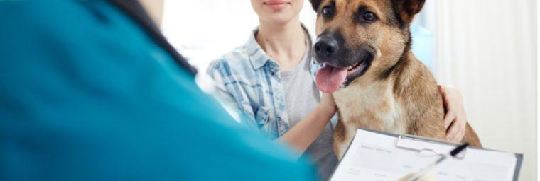 raisons assurer son chien