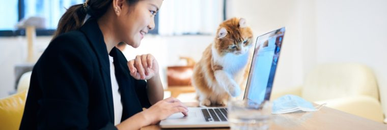 tarifs garde de chat à domicile