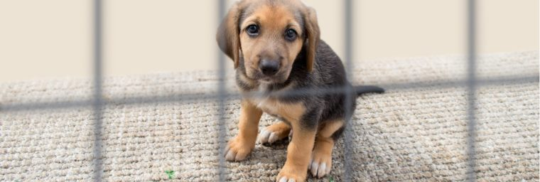 Chenil petit chien
