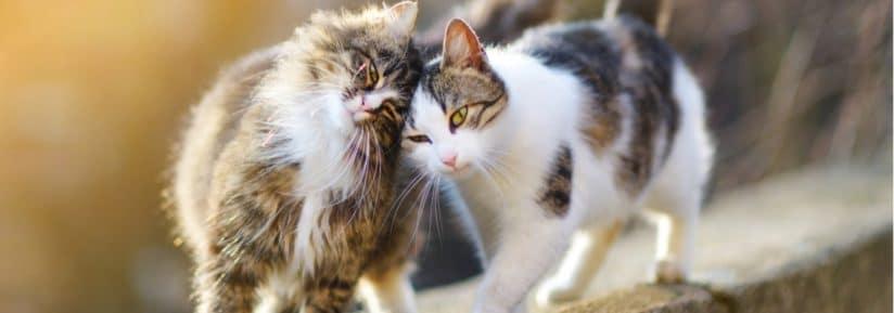 Meilleure mutuelle pour chat