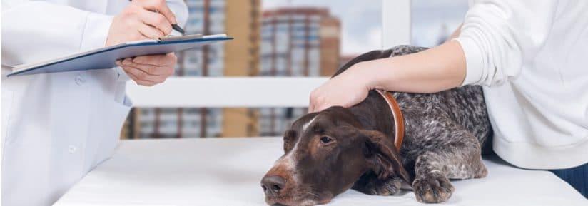Nourriture maison chien insuffisance rénale