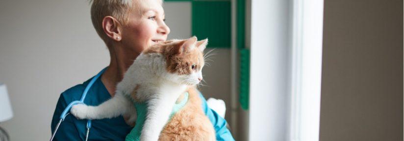 Prix consultation vétérinaire chat