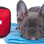 Urgences vétérinaires