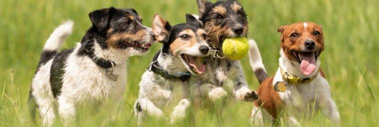 assurance chien sans carence ni franchise