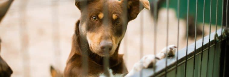 chenil pour chien pas cher