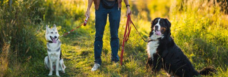 garde chien par un particulier