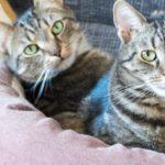 garde de chat à domicile tarifs