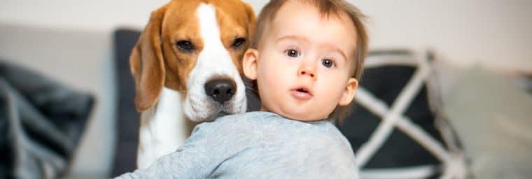 garde de chien par un particulier