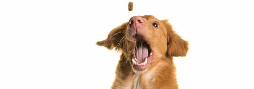 meilleures friandises pour chien