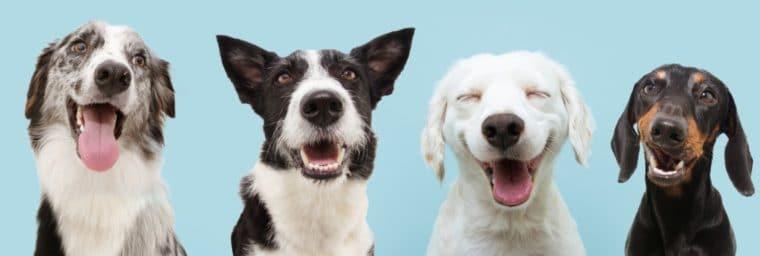 mutuelle chien sans délai carence