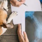 prix consultation vétérinaire chien