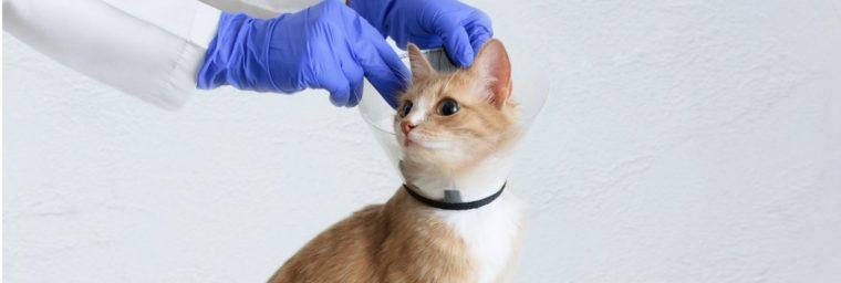 prix d'une hospitalisation d'un chat